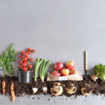 معیارهای تهیه محصولات ارگانیک و فواید آن